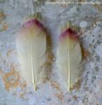 Yellow-billed Stork Feathers by BluesOfTheFeather