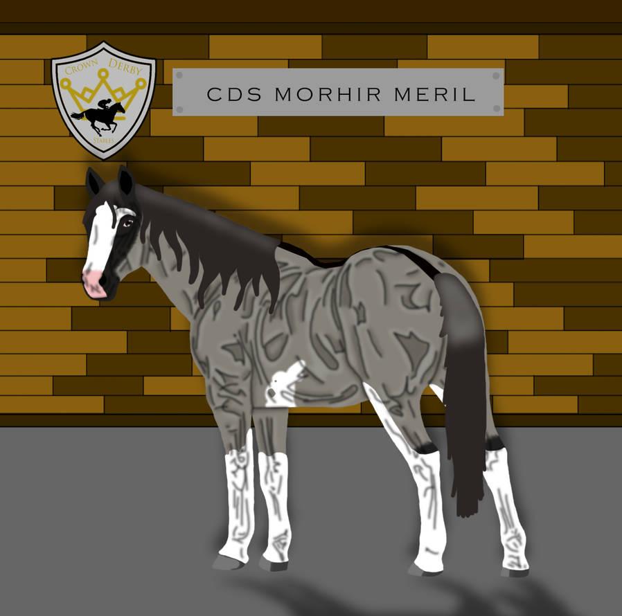 CDS Morhir Meril