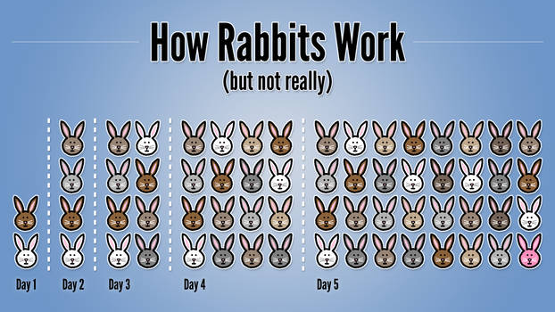 How Rabbits Work