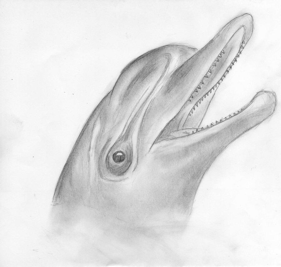 Dolphin sketch by nightmouse94 on deviantart dolphin sketch by nightmouse94 thecheapjerseys Choice Image