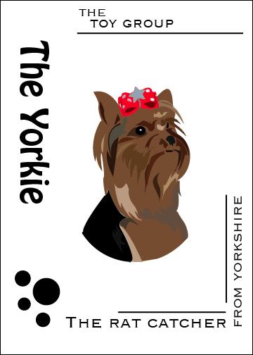 The Yorkshire Terrier Design by doodleplex