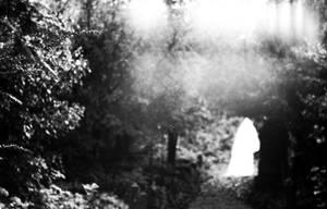 Spirit of the calm forest. by jarofcherryjam