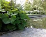 Aquatic plant 3