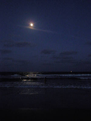 Lets Walk the Moonlit Beach by mcompton99987