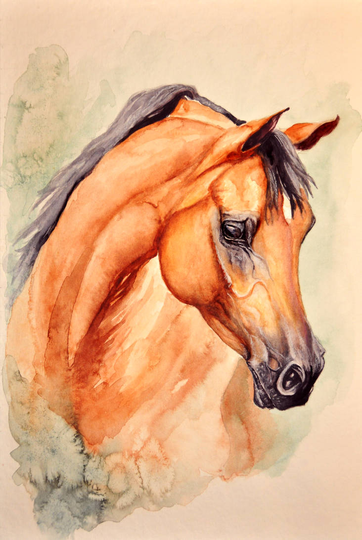Arabian - watercolour