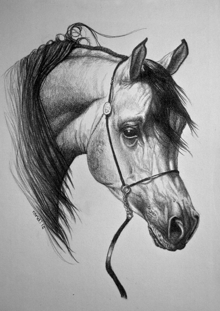 Arabian Horse Pencil Drawings Arabian Horse Drawing my