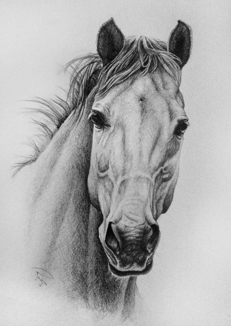 Horse By Nutlu On Deviantart