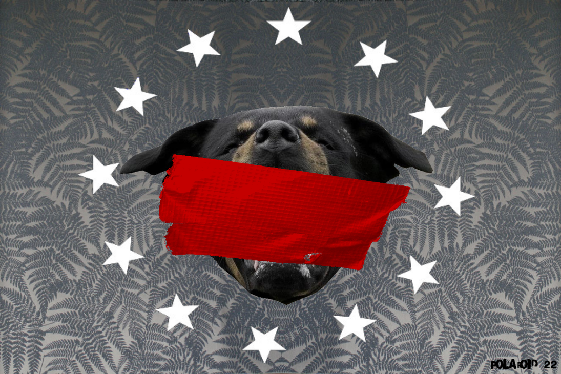 Givenchy Type Rottweiler Background Tape Tagged By PolaroidTwentyTwo