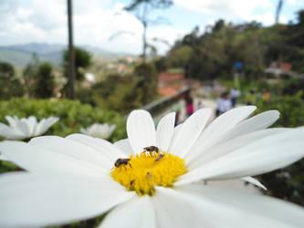 Lil' bugs n-n by Givalita