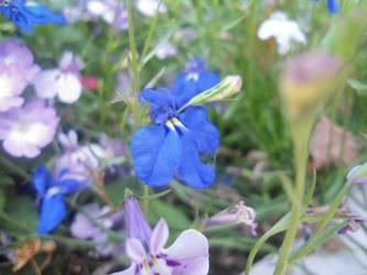 Little flowers by Givalita