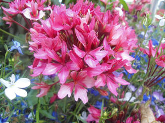 Flowery pink explosion by Givalita