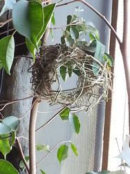 Nest of the Weaver