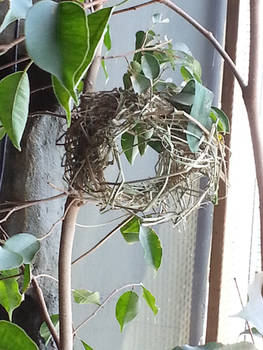 Nest of the Weaver