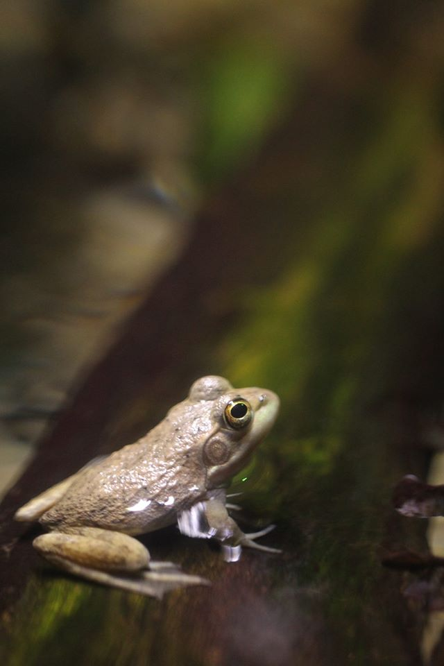 Froggy by Gamerlunalicious