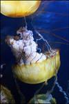 Jellyfish I by Pwetra