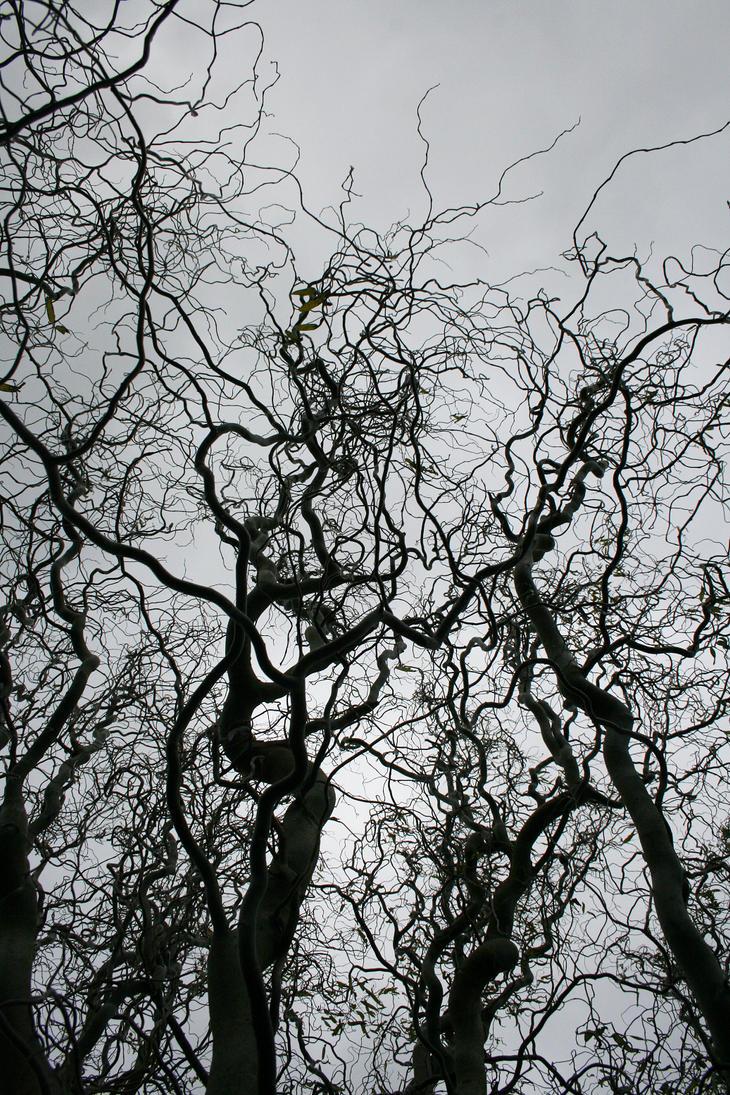 stock: tree 3 by rocketlaunch