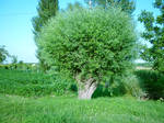 Tree_01 by BlackHeresy