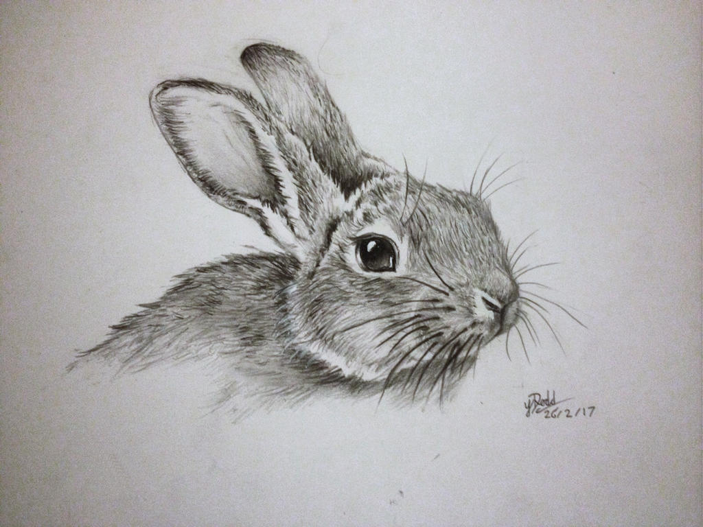Rabbit pencil drawing by anartenthusiast