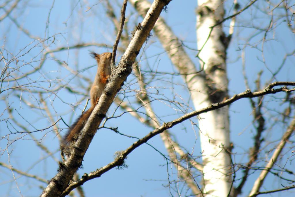 Squirrel by Irkaaa