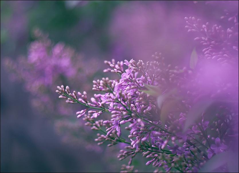 http://fc07.deviantart.net/fs70/f/2010/123/f/d/In_The_Enchanted_Garden_V_by_alessandraaa.jpg