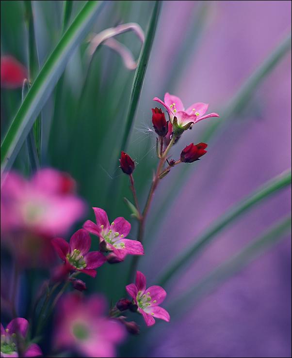 http://fc04.deviantart.net/fs71/f/2010/137/0/9/__Paper_flowers___by_alessandraaa.jpg