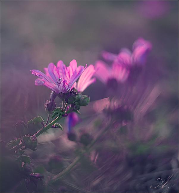 http://fc05.deviantart.net/fs71/f/2010/254/4/5/forever_young_vi_by_alessandraaa-d2yhsob.jpg