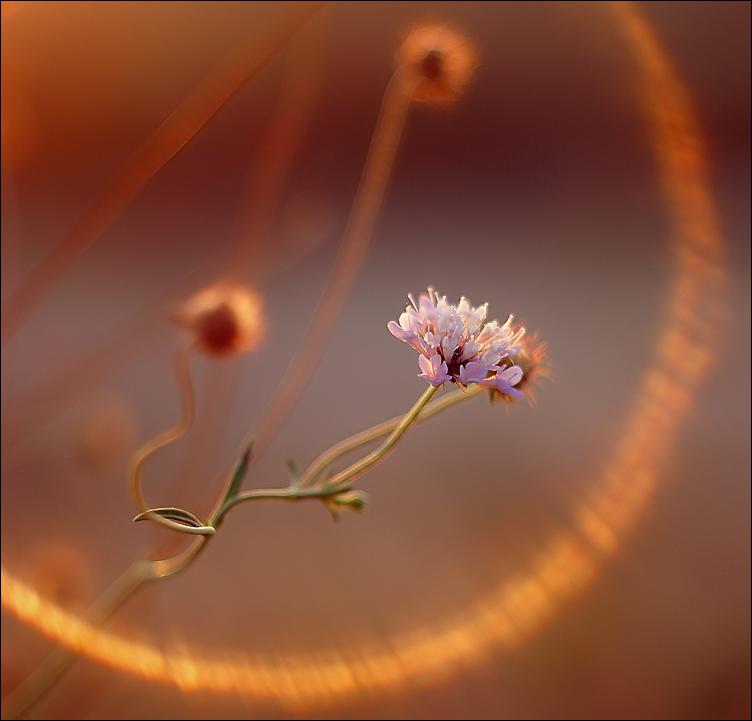 http://fc07.deviantart.net/fs71/f/2011/115/9/d/imaginary_lxxviii_by_alessandraaa-d3euyby.jpg