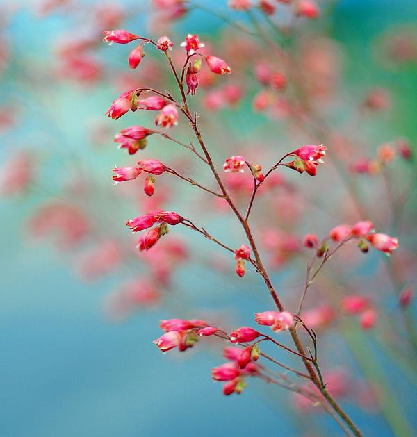 http://fc06.deviantart.net/fs71/f/2011/123/1/5/sweet_dreams_by_alessandraaa-d3fhim0.jpg