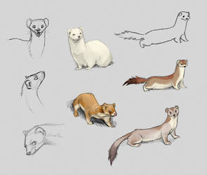 Stoats Sketches by Moonticore