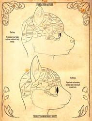 Furry Phrenology
