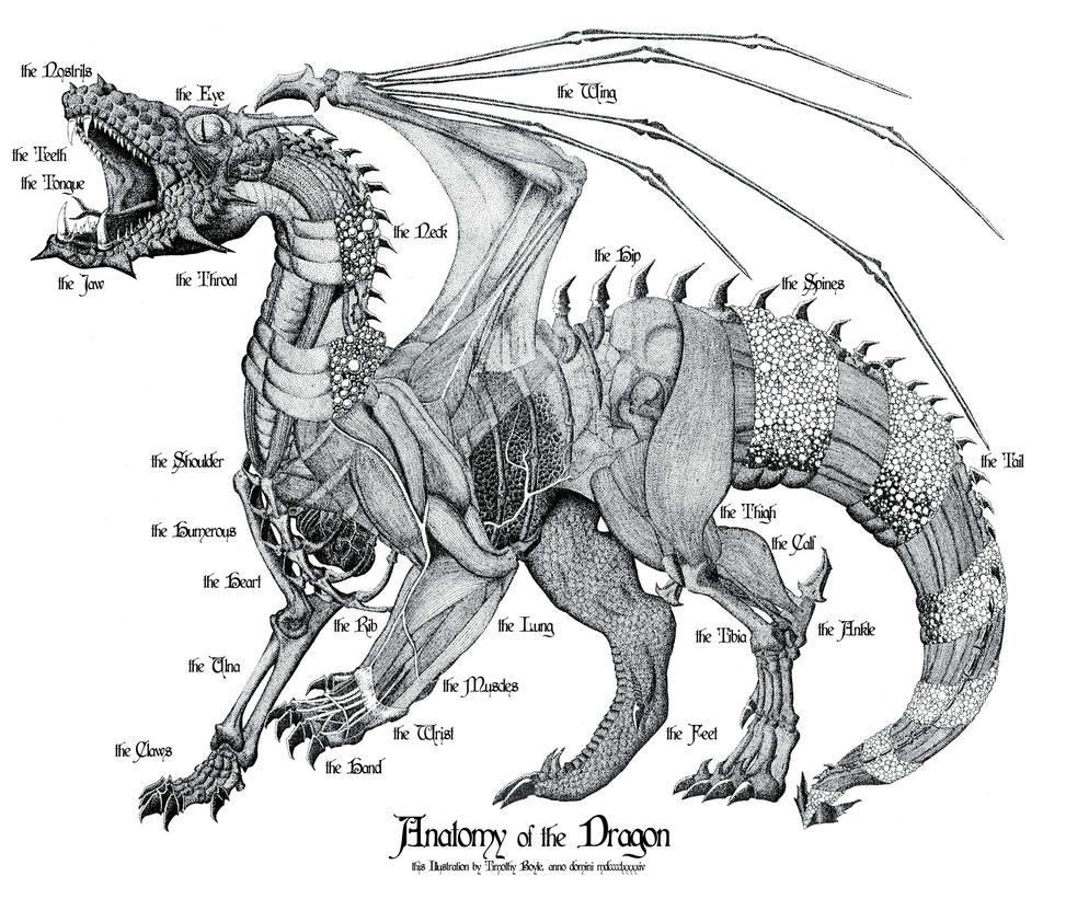 Anatomy Of The Dragon By Thirdmoth On Deviantart