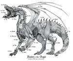 Anatomy of the Dragon
