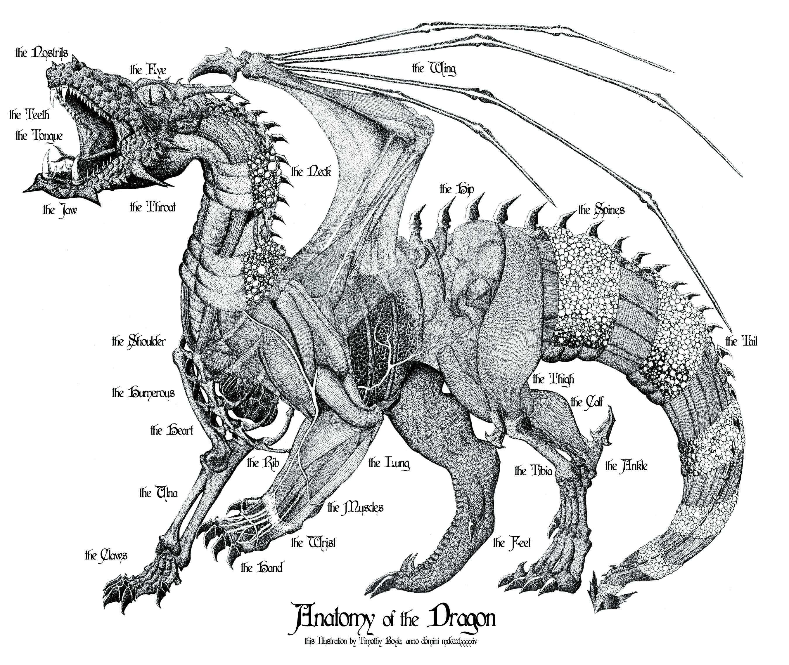 Anatomy of the Dragon by thirdmoth on DeviantArt