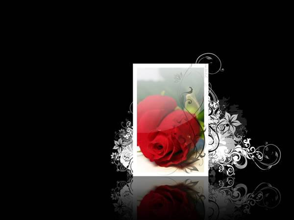 Rose wallpaper by om3nbz