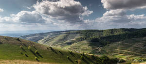 Vine Hills in France