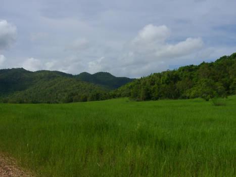 Philippine Meadow