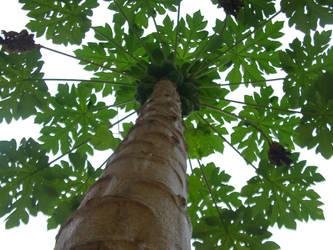 Papaya Umbrella by selidorbound