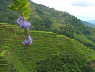 Banaue Terraces by selidorbound
