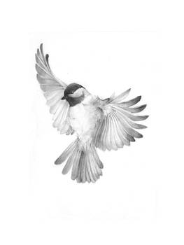 bird III