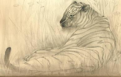 Tiger sitting by nicho91