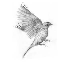 bird VI by nicho91