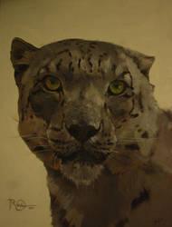 38. Tigru