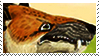 Andrewsarchus Stamp. by HausofChizuru