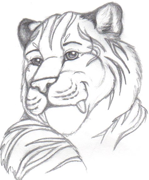 simple tiger drawing