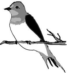 Philippine Birdlife by calej
