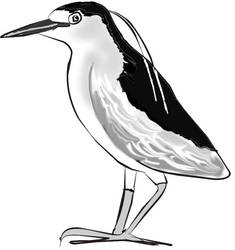 Black Crowned Heron by calej