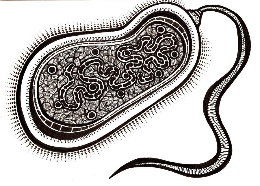Las Bacterias Para Colorear