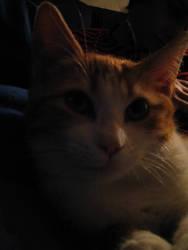 Tom, new member of our family