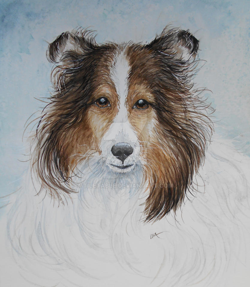 Sheltie Love by tiletable