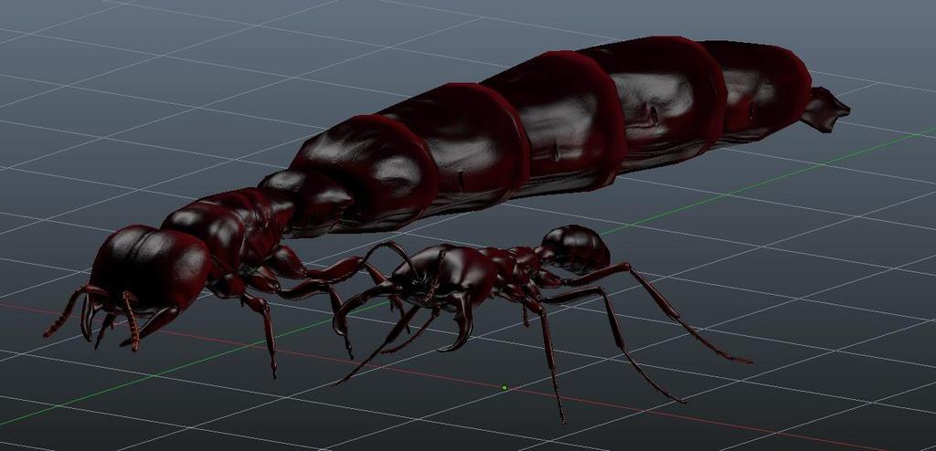 Siafu ant queen
